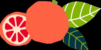 illustration of grapefruit